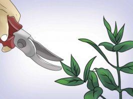 Раствор «Хлорофиллипта» — от ангины до грибка стопы