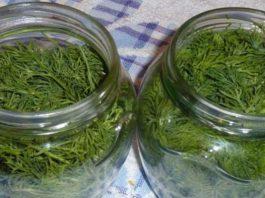 12 чудесных рецептов лечения огородным укропом