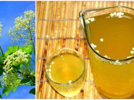 Лимонад из бузины от атеросклероза, чай от простуды и целебный мед — все от болезней спасёт