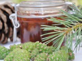 Варенье из сосновых шишек от кашля
