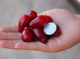 7 ягод кизила спасут от отечности ног и вздутых вен. Читайте внимательно рецепт и избавляйтесь от болезни