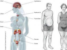 5 продуктов, которые вызывают гормональный дисбаланс. Вы должны это знать