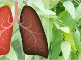 9 растений и трав, которые восстанавливают поврежденные легкие, борются с инфекциями и усиливают здоровье легких