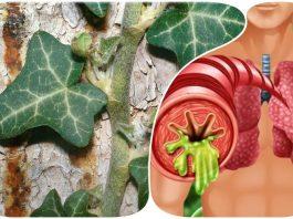 Лучшие отхаркивающие средства: 5 натуральных лекарств, чтобы вывести мокроту и забыть про кашель
