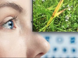 Проблемы со зрением. — Трава, которая точно заменит окулиста