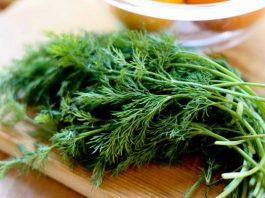 Укроп — лечебные свойства и противопоказания зеленой приправы