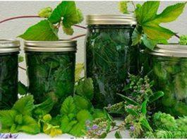 9 природных рецептов от варикозного расширения вен и сосудистой сетки