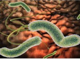Как можно избавиться от бактерии, которая вызывает у Вас вздутие живота, изжогу, рефлюкс, диарею и другие симптомы