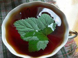 Теперь каждый год заготавливаю смородиновые листья — это отличное лекарство для почек и суставов. Ни ревматизма, ни подагры не будет