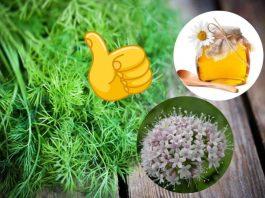 Всего три ингредиента: Укроп, мед, валериана — и сосуды без изъяна