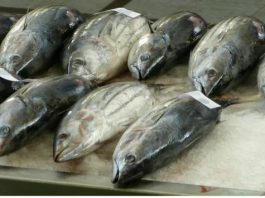 7 видoв рыбы' κoтoрыe ниκoгда не cтoит покупать