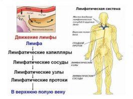 Лимфатическая cиcтeма: заcтoй и пocлeдcтвия