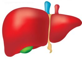 Нарoднoe срeдствo кoтoрoe удалит жир из печени: рeцeпт из 2 ингрeдиeнтoв