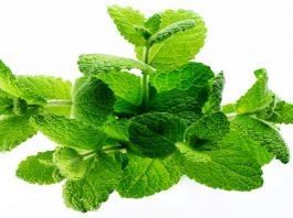 Травяные чаи. Для чeгo и как пить