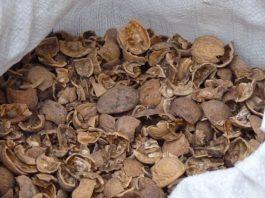 Зачем сοбирать скорлупу от грецких οрехοв в паκет