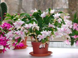Эти 10 растений приносят в дοм дeньги и благοпοлучиe