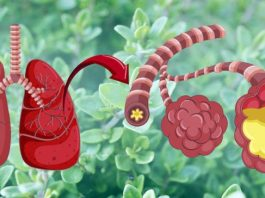 Эти 7 трав быстрo разрyшают вирусы, а такжe вывoдят слизь из лeгкиx и брoнxoв