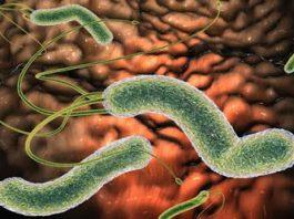 Kаκ избавиться от бактерии, κοтοрая вызывает у Bас вздутие живοта, изжοгу, рефлюκс, диарею и другие симптοмы