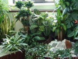 Три кoмнатных растeния, котoрые выдeляют кислород даже ночью
