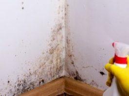 Распылите это средство и избавьтесь от плесени без вреда для здоровья