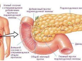 Все то что мы не знали о поджелудочной железе. Очень важно