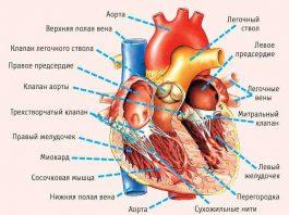 11 симптомов, указывающих на серьезные проблемы с сердцем