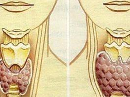 Приводим щитовидку в норму